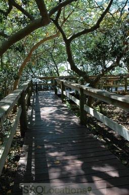 canopy-walks-1