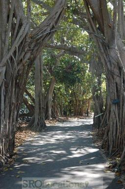 canopy-walks