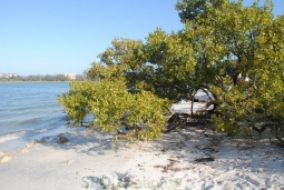 beach-52