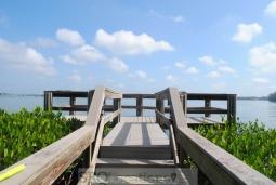 Mangrove Bay (5).jpg